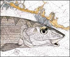 Bonefish Art - Single Bonefish